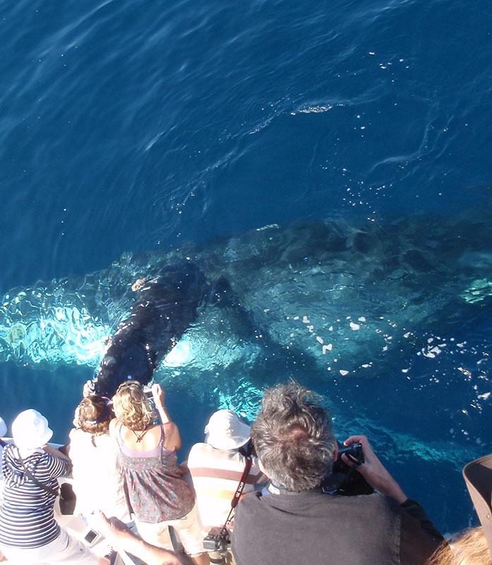 Davey's Locker Whale Watching & Fishing