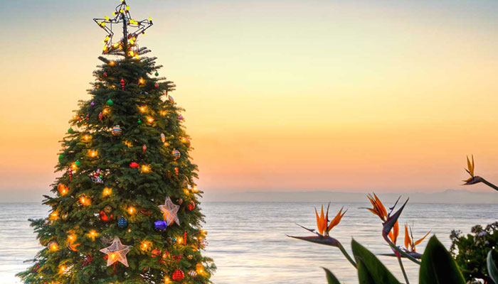 deck the cove crystal cove 18th annual holiday tree lighting holiday bazaar