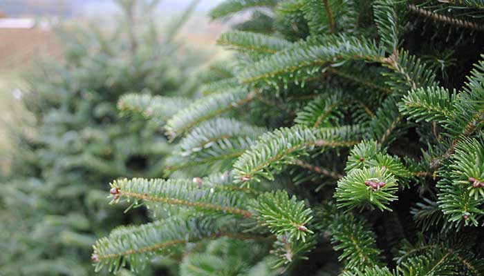 Newport Dunes Holiday Tree Lot