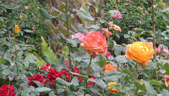Bastille Day Celebration and Rose Garden Dedication