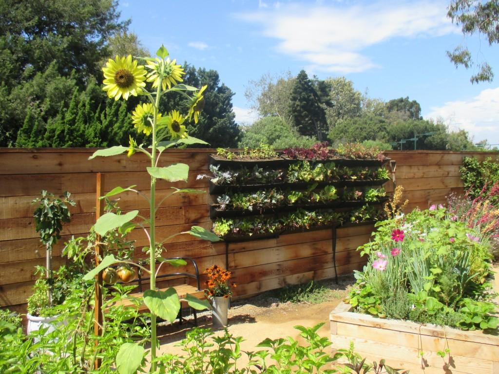 Provenence Garden