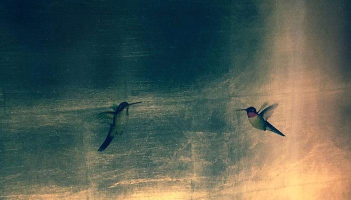 Painbirds at Lido Live