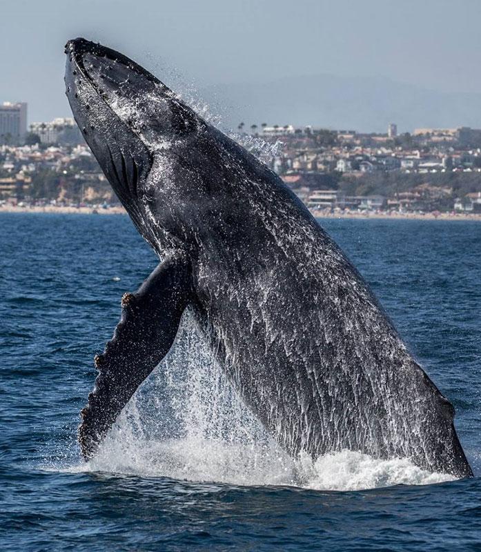 Newport Landing Whale Watching