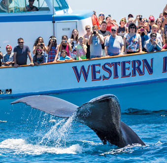 WHALE WATCHING OFF NEWPORT-$16 SPECIAL