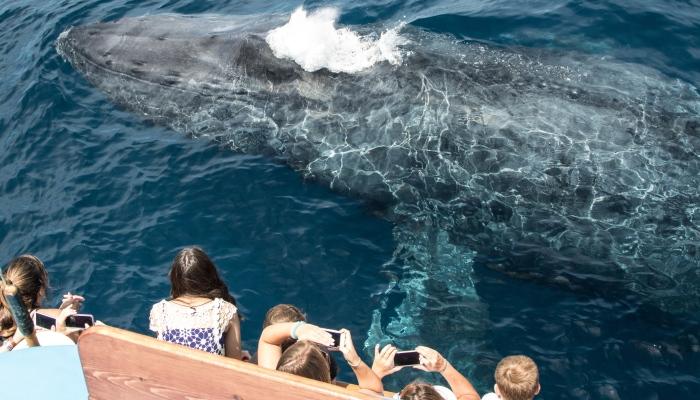 whale watching newport beach