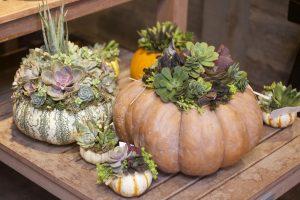 succulent-topped-pumpkins-2015