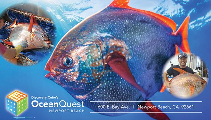 Ocean Matters Speaker Series – Meet the Opah