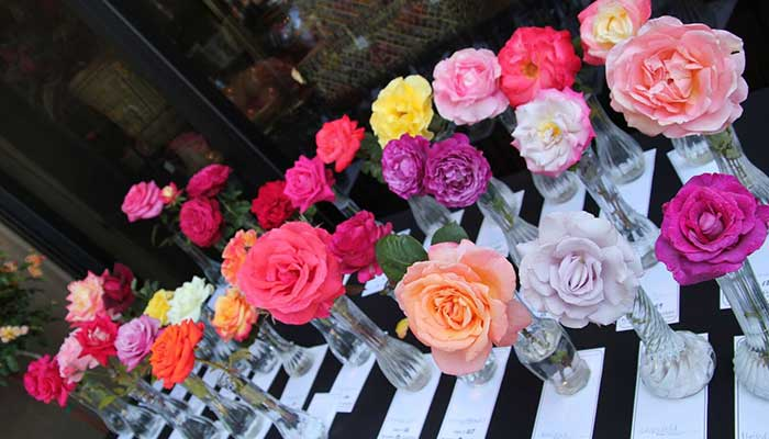 24th Annual Amateur Rose Show & Contest