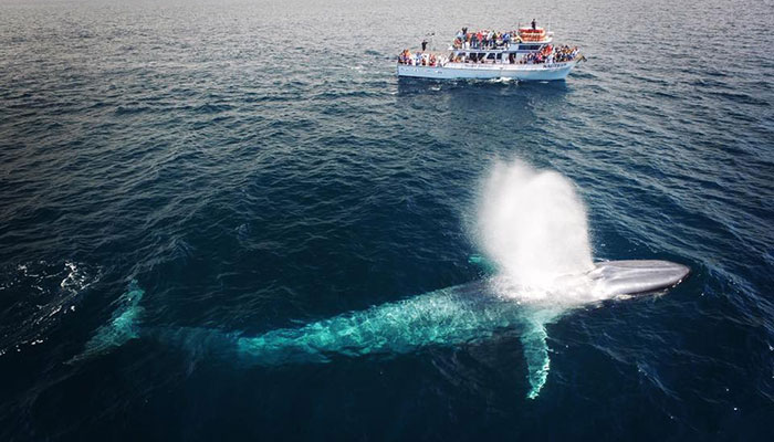 Blue Whale Migration-$20 Whale Watch