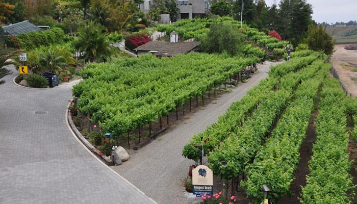 Newport Beach Vineyards & Winery