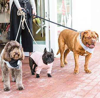PAW-fect Places In Newport Beach