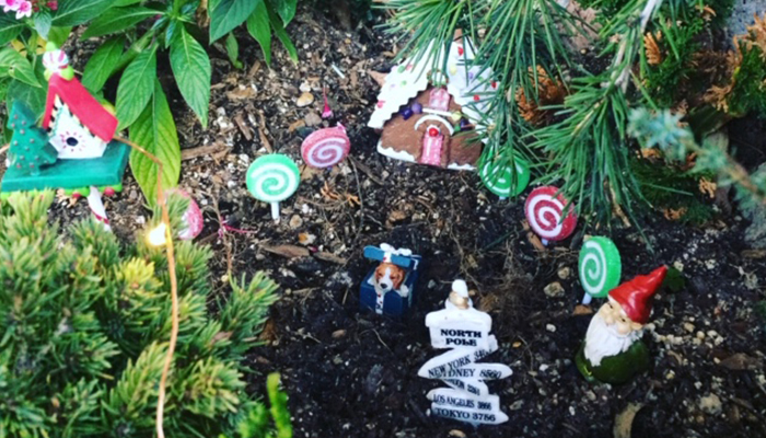 Christmas Light Walk at Sherman Library & Gardens