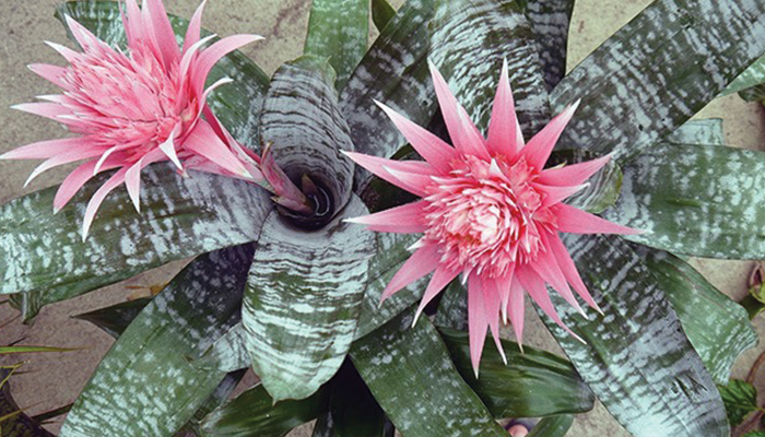 Bromeliad Show and Sale at Sherman Gardens