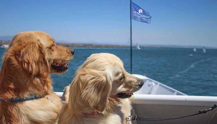 1st Annual Dogs on Deck in Newport Beach