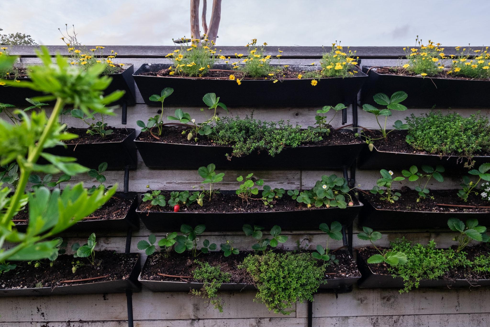 Provenance herb garden