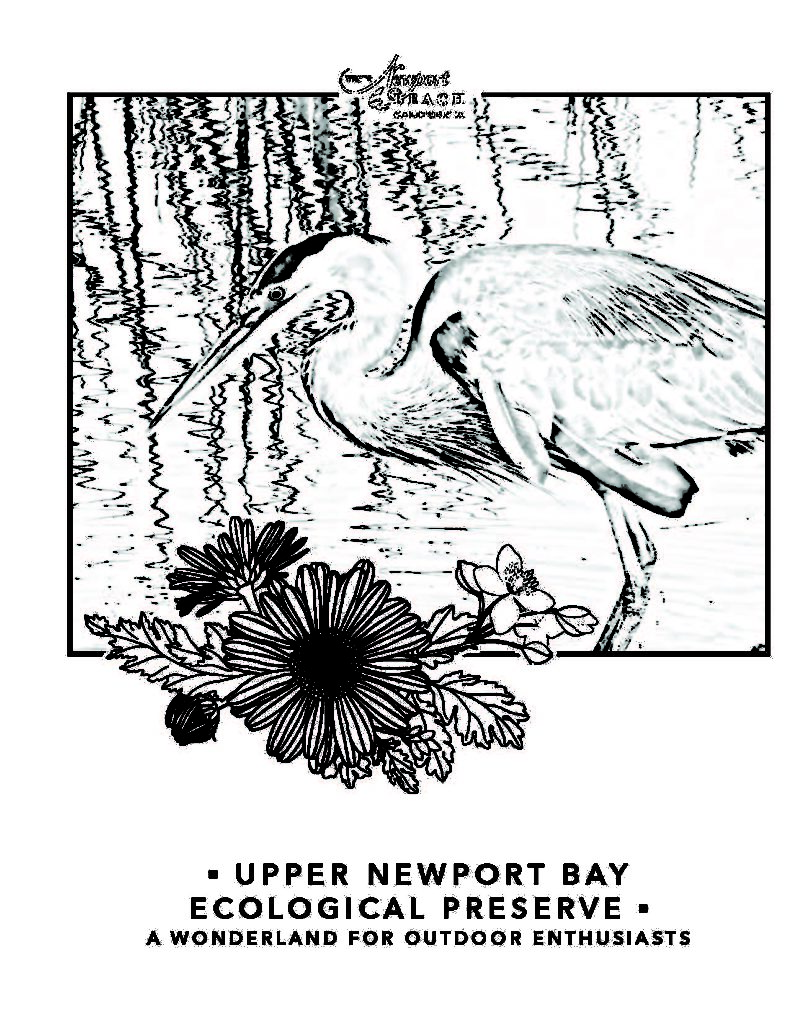 Upper Newport Bay