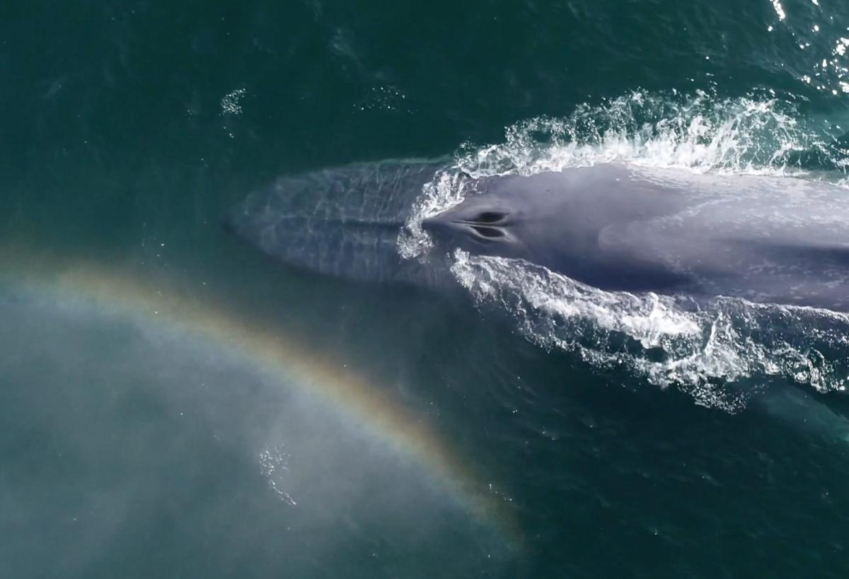 Whales & Rainbows